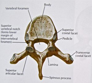 Human Anatomy and Physiology Questions including How old